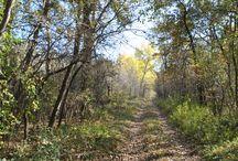 Peszéri-erdő 2017 október / Magyarország, Bács-Kiskun megye, Kunpeszér, Natura 2000 terület, erdei élőhely-rekonstrukciós program, OAKEYLIFE fotók: Dr. Bárány Gábor www.oakeylife.hu