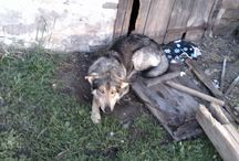 Rex Jest Bitewan?! / Ten Pies Jest Bitewan?! Cyli Gry Grajmy Bitewan Jest Psy!