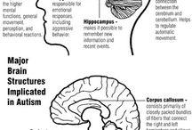 brain wonders / by Susan Plue