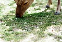Nara / 大好きな奈良に関するの画像を Pin ♪