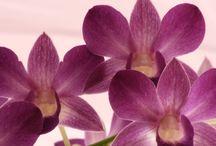 Blumen  / die wundervolle Welt der Farben