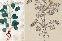 Voynich botanical plants
