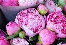I'm Floral / by Allison Levin