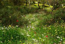 seren  garden