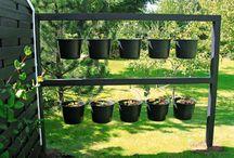 Haven og drivhus