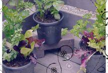 男前鉢 野菜・ハーブ寄せ植え