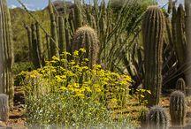 Sonoran Desert of Arizona / Photography of the desert floor of Southern Arizona