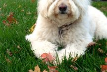 Zara / For adorable, fluffy pictures of Michael Salove's Polar Bear (err, I mean dog..) see here!