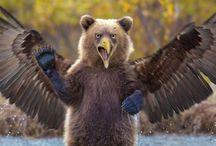 Bear Hybrids