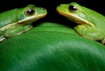 Animals: Frogs