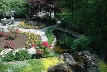 Award Winning Gardens / Beautiful blooms on the Gracehill Bed and Breakfast grounds, Townsend, TN