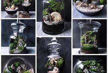Florarium Terrarium Terraquarium / дизайн интерьера