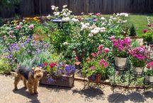 Garden - Pets