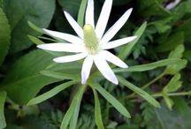 Garden Weeds / by Halleck Horticultural