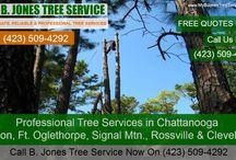Chattanooga Tree Service