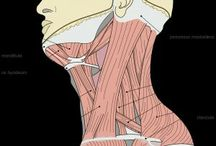: anatomy :