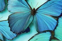 Out of the blue / blue, aquamarine, indigo, inspiration, design, ideas