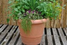 Planters to ward off mosquitos