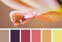 farebna paleta