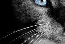 Cat & Dog/ Kedi & Köpek