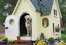 hunde huse