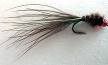 Stillwater trout