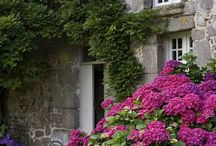 Ranskalainen puutarha