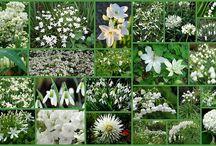 Witte tuin