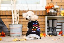 The Cold Weather Collection 2016 / Fall & Winter Wear by Bailey & Bella, available exclusively at Pet Vau