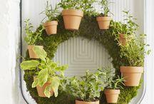 Gardening Dreams...
