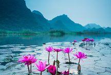 flora:  rostliny, květiny - fleurs - flowers