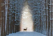 Winter Wonderland... ♥