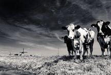 Black and White Photo Animals