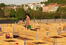 Urban gardening / Growing vegetables in cities - smart solutions