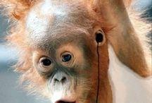 Little monkeys / Little monkeys