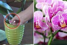 #Jardinage #Plantes