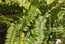 Planter innendørs