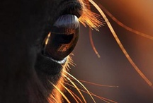 Tiere / Süß