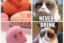 grumphy cat