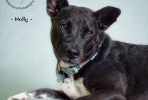 Arizona Pet Adoption / Adopt a pet! / by Az Pet Professionals