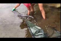 Filmpjes vissen en vakantie. / filmpjes over de gevangen vissen en de locatie waar er gevist word.