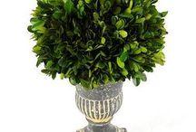 Topiary & Trees & Plants