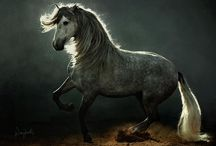 Horses / Strength, grace and beauty! / by Anne Riches