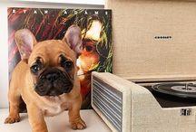 If i ever get a doggie :)