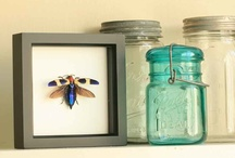 Framed Beetles / Framed Beetles to look at and love