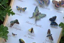 realizzare farfalle