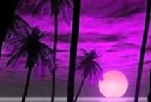 Love purple / by Irre 70