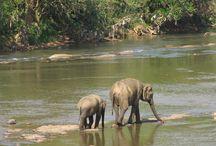 terre lontane / viaggio in Sri Lanka...terra dei nostri tè !!!