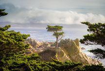 Steven Cox Instagram Photos The Lone Cypress.  #California #PebbleBeach #golf #bigsur #nature #golfcourse #igtravel