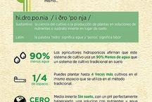 Infograficos SmartCultiva / Datos e información sobre temas ecológicos y de cultivos